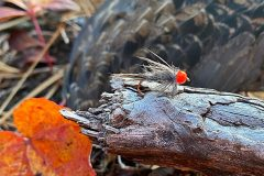 North_Maine_Cast_Blast_Grouse_Hunting1
