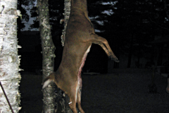 north-maine-deer-hunting-TedDeerHanding2016