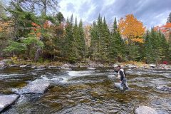 maine-fall-fly-fishing-wild-brook-trout-orvis-flyfishing4