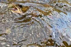 maine-fall-fly-fishing-wild-brook-trout-orvis-flyfishing5