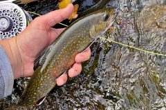maine-fall-fly-fishing-wild-brook-trout-orvis-flyfishing7