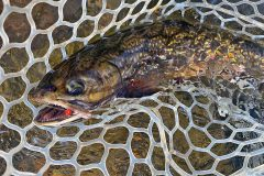 maine-fall-fly-fishing-wild-brook-trout-orvis-flyfishing8