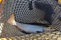 maine-fly-fishing-brook-trout-2019-1