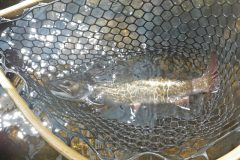 maine-fly-fishing-brook-trout-2019-6