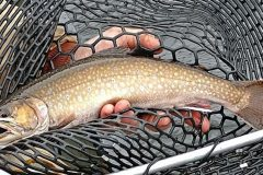 maine-fly-fishing-brook-trout-2019-_2