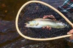 maine-fly-fishing-brook-trout-2019-_5