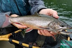 maine-fly-fishing-brook-trout-20190121-010