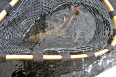maine-fly-fishing-brook-trout-20190121-019