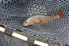 maine-fly-fishing-brook-trout-20190121-020