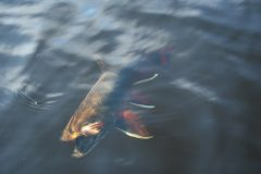 maine-fly-fishing-brook-trout-20190121-034