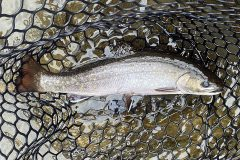maine-fly-fishing-north-woods-chandler-lake-sporting-camp-014