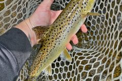 maine-fly-fishing-north-woods-chandler-lake-sporting-camp-021