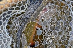 maine-fly-fishing-north-woods-chandler-lake-sporting-camp-025