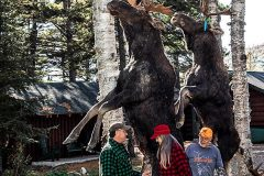 maine-moose-hunting-game-pole-north-maine-woods