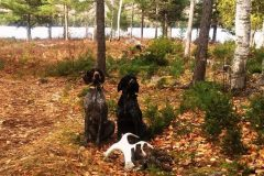 north-maine-grouse-woodcock-hunting_043-20200118