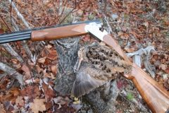 north-maine-grouse-woodcock-hunting_045-20200118