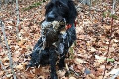 north-maine-grouse-woodcock-hunting_048-20200118
