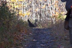 north-maine-grouse-woodcock-hunting_053-20200118