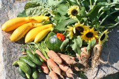 maine-sporting-camp-food-chandler-lake-camps-garden-harvest