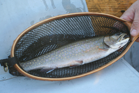 Northern Maine Trout Fishing