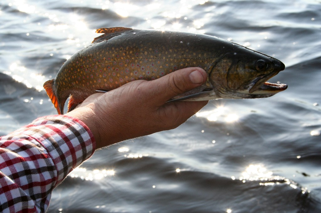Maine Fly Fishing for Wild Brook Trout and Land Locked Salmon