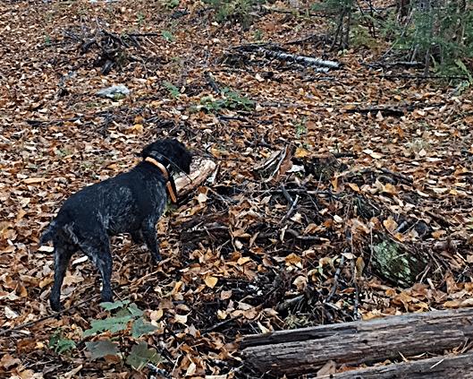 Maine Hunting Preserve