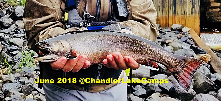 Native Wild Brook Trout caught at Chandler Lake Camps June 2018